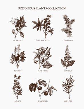 poisonous plants collection