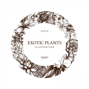ink hand drawn exotic plants