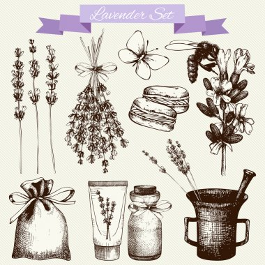 Lavender flowers set