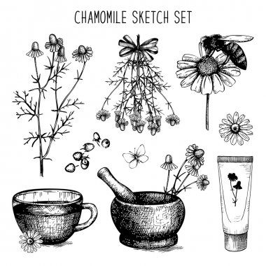 Vintage collection of graphic chamomile flowers