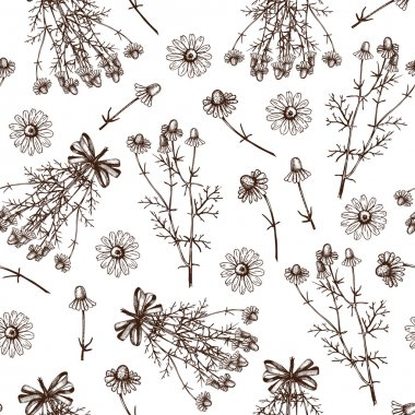 Background with chamomile and lavender flowers