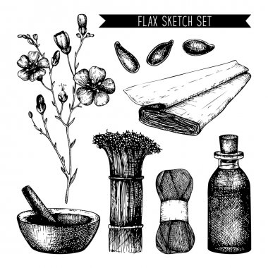 Vector set of ink hand drawn flax illustration isolated on white. Vintage flax sketch clip art vector