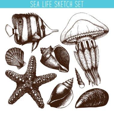 Fish, sea star, jellyfish and sea shell
