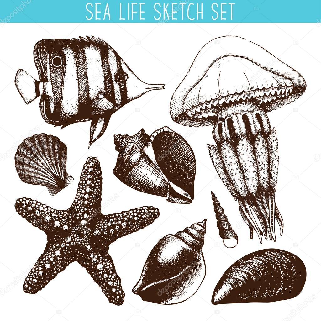 Fish, sea star, jellyfish and sea shell