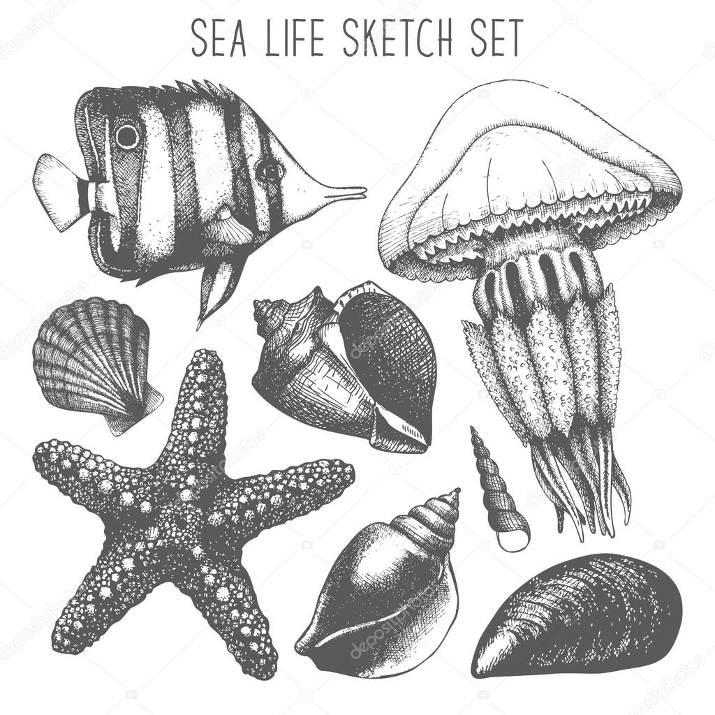 Ffish, sea star, jellyfish and sea shell