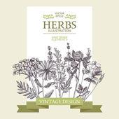 Fotografie Vintage medicinal herbs sketch