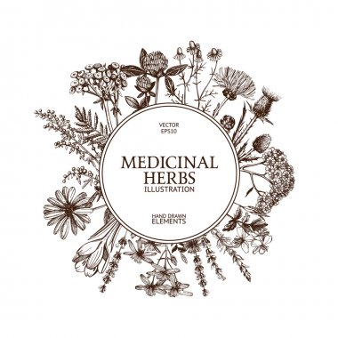 Vintage frame with medicinal herbs