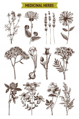 Collection of hand drawn spices and herbs