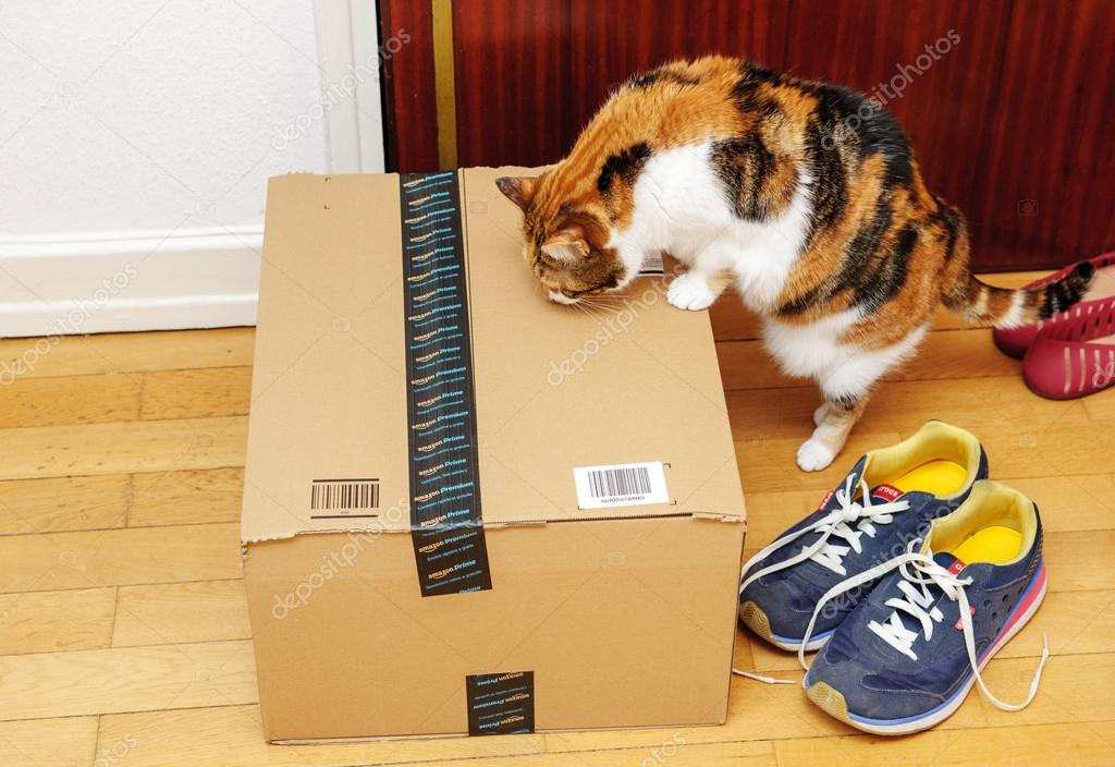 Curious funny cat inspecting Amazon box at the door