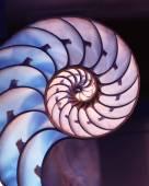 Vyjmout z shellu Nautilus na kouzelné pozadí