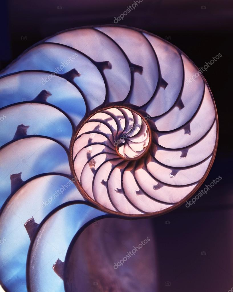 Cut away of Nautilus shell on magic background