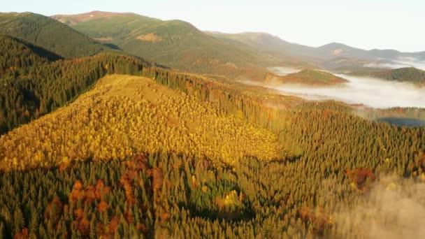 Légi drón kilátás a színes őszi Kárpátok hegyek. A hegyvonulatokat tűlevelű és vegyes erdők borítják élénk őszi színekben. Lent láthatod a falusi házakat..