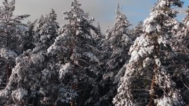 Krásné sněhem pokryté jehličnaté stromy smrku a borovice v lese. zimní krajina, zasněžená zima v lese, sníh leží na větvích stromů.Pohled z výšky.