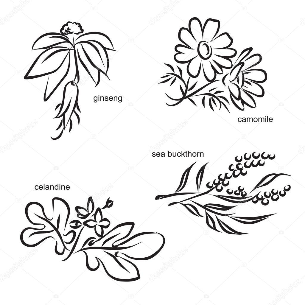 Stylized medicinal plants, set 1