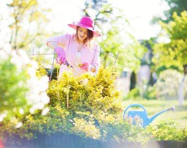 Maintenance gardening concept.