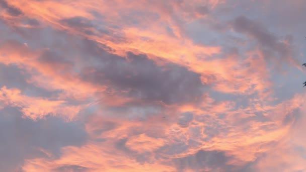 Pálmák és lombhullató fák sziluettje naplementekor. 4k felvétel
