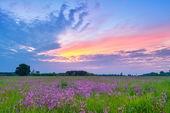Photo Beautiful sunrise countryside field flowers sky clouds landscape
