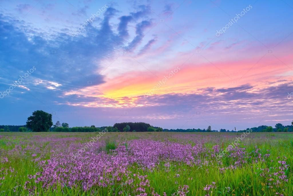 Beautiful sunrise countryside field flowers sky clouds landscape