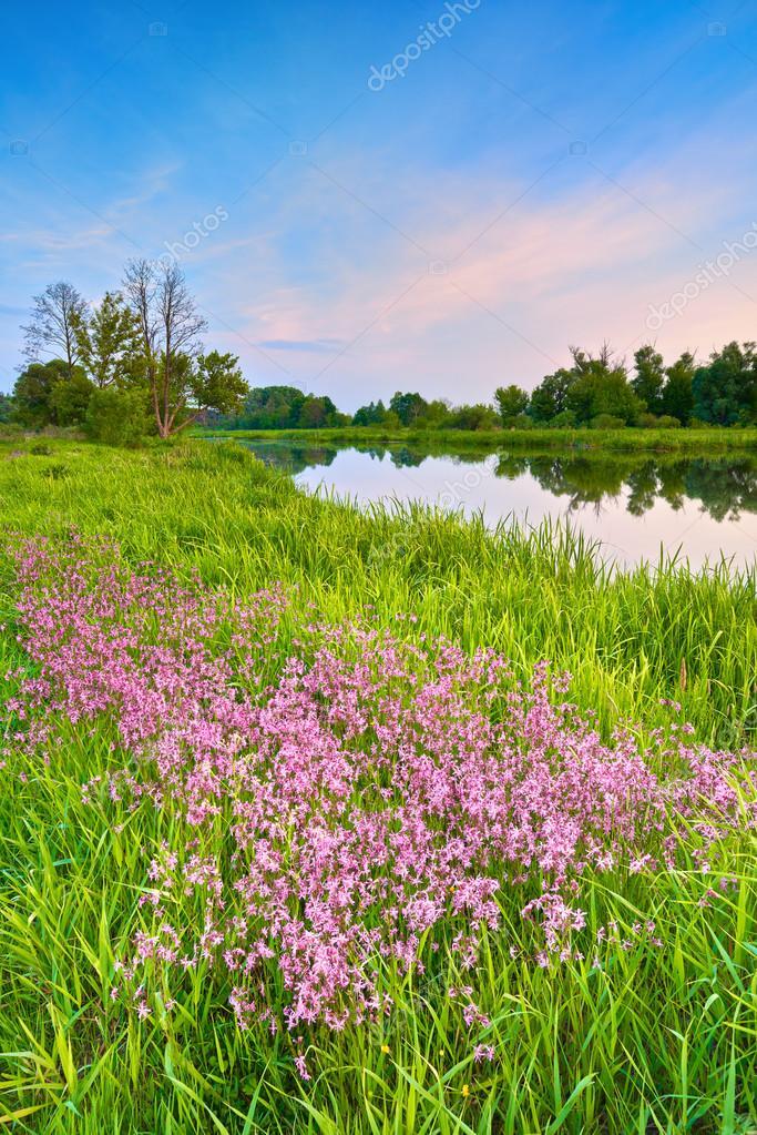 Фотообои Загородный пейзаж весенний пейзаж голубое небо река поле трава цветы