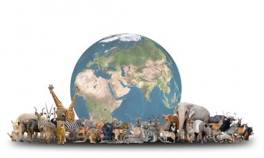 animal of the world with planet earth