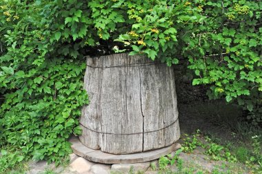 Old wooden well under viburnum