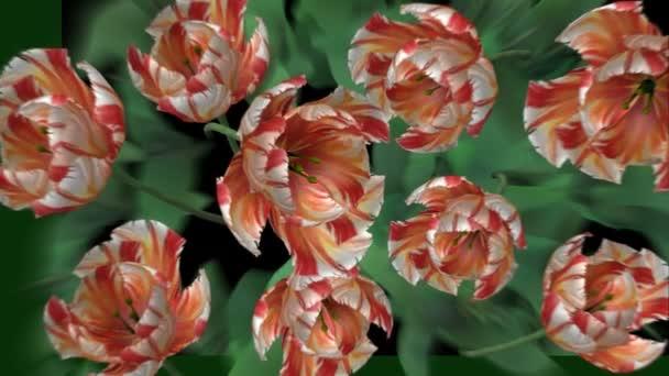 Kvetoucí květiny - Hd