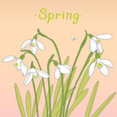 Fotografie Snowdrops spring bouquet. Hand-drawn vector illustration. Card,