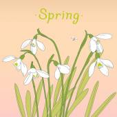 Snowdrops spring bouquet. Hand-drawn vector illustration. Card,