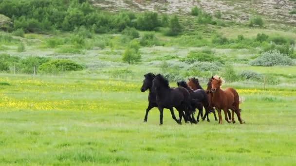 Koně běží na louce
