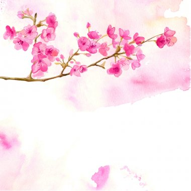 Pink background with branch of cherry blossom. Vector watercolor illustration of sakura. clip art vector