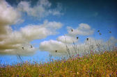 Photo Spring Field landscape