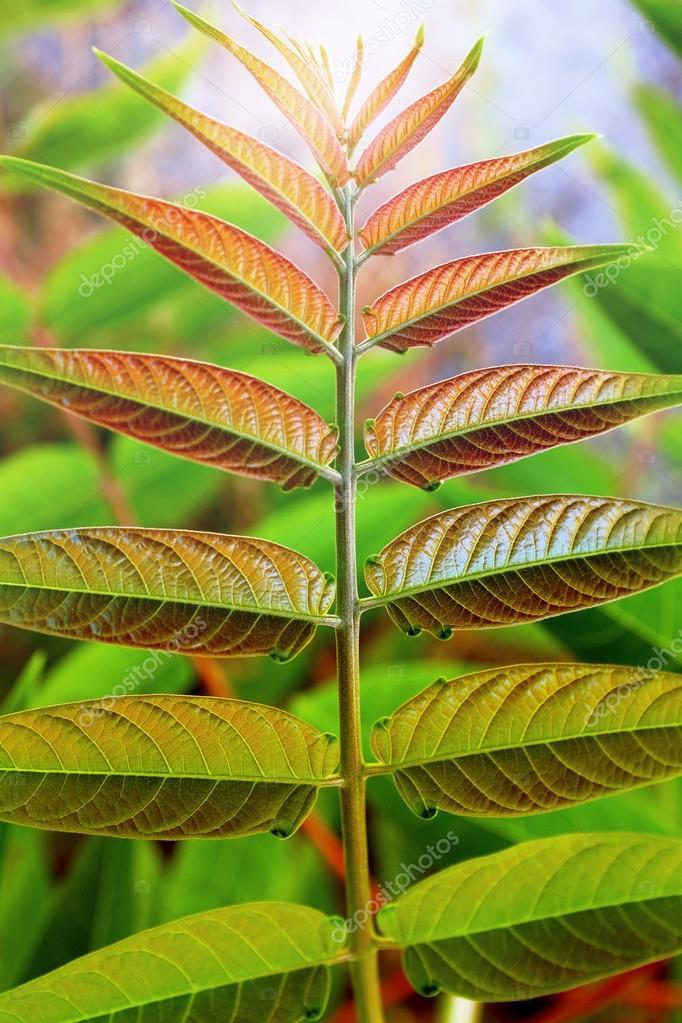 planta silvestre con hojas con textura simétricas — Foto de stock ...