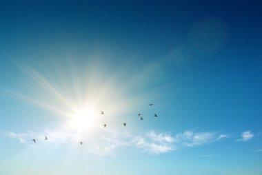 Birds flying over blue sky