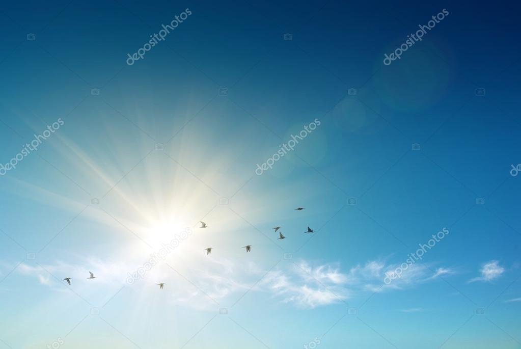Birds flying over blue sky