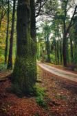 silnice v zeleném lese
