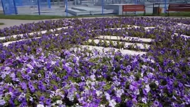Fialové květy kvetou na velkém záhonu s logem společnosti