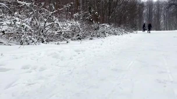 Aus der Ferne. Die glückliche Familie hat Spaß beim Spaziergang durch den Winterpark und beim Rodeln der Kinder