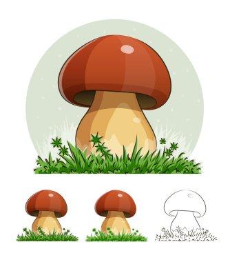 Cep. Mushroom.