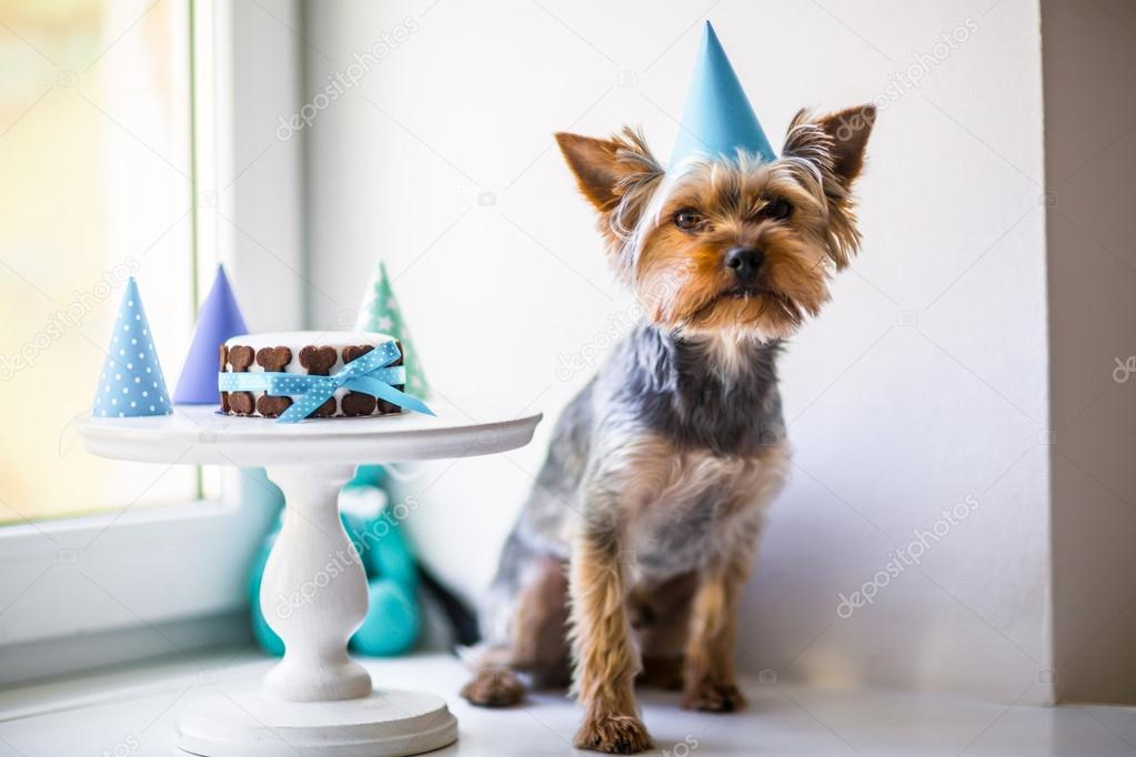 anniversaire petit chien
