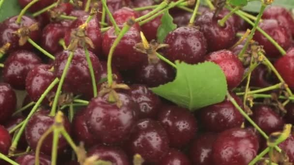 Pile of fresh, ripe, juicy berries cherry whirl.