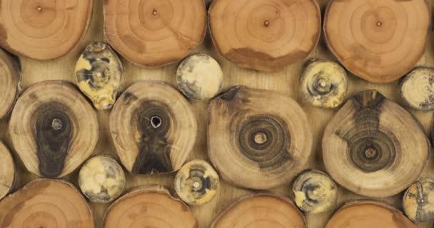 Rotace. Dřevěný panel z řezaných větví stromů. Dřevěné textury pozadí.