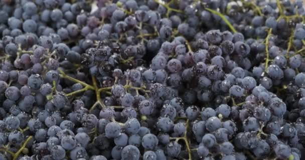 Panorama. Raindrops fall on juicy, ripe bunch grapes. Fruit background Raw fruit and vegetables
