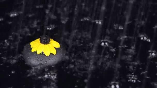 Dešťové kapky dopadající na černý kámen a žluté květy