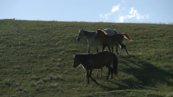 Pferde mit Fohlen