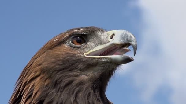 dravý pták hledá kořist