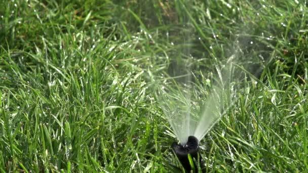 zalévání trávníku.