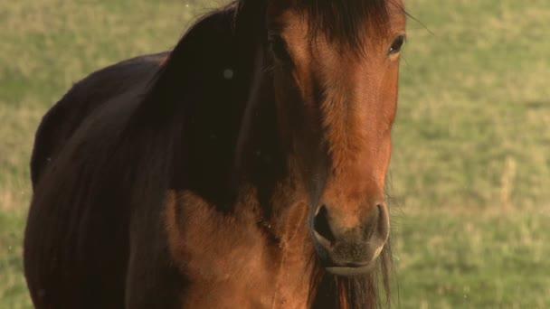 Kůň vypadá podivně