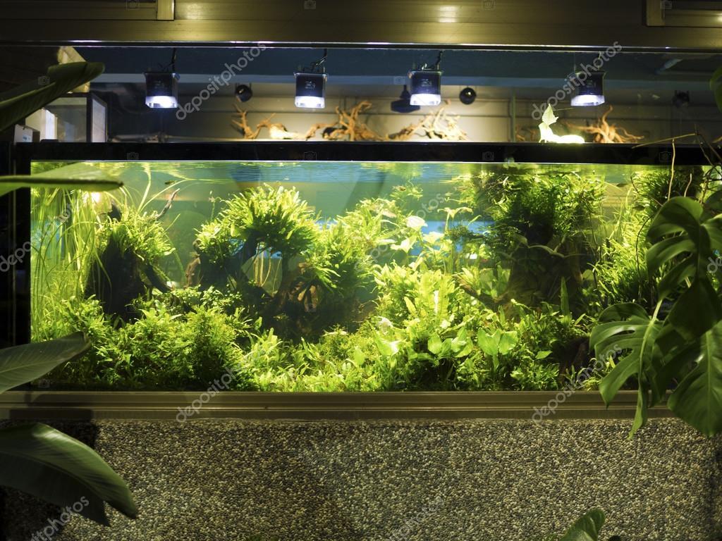 Inrichting van de beplante tropisch zoetwater aquarium  u2014 Stockfoto  u00a9 photoncatcher63 #117903174