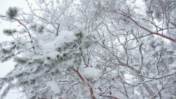 stromy pokryté sněhem