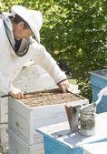 Včelaře s voštiny v rukou